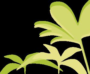 Plantas DER